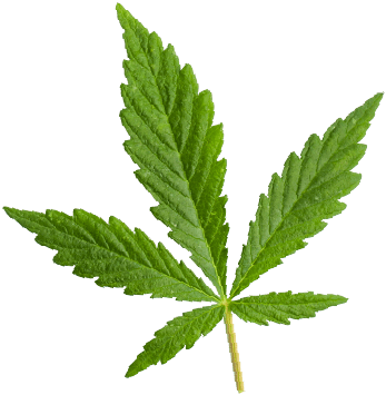 http://medigreen.bold-themes.com/consulting/wp-content/uploads/sites/7/2018/12/marijuana_leaf.png
