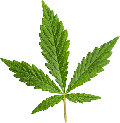 http://medigreen.bold-themes.com/dispensary/wp-content/uploads/sites/6/2018/12/marijuana_leaf_large.png